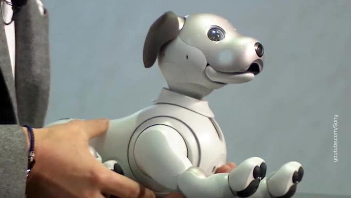 Sony воскресила робопса Aibo, а Apple сдала китайцев властям
