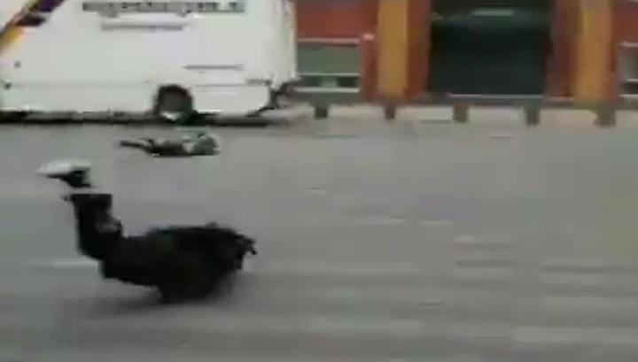Ураганные ветра в Европе переворачивают грузовики и уносят людей. Видео