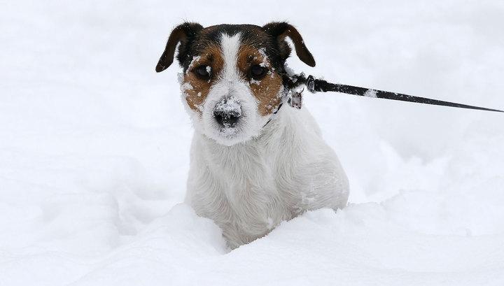 Снегопад в Москве сменится 12-градусным морозом