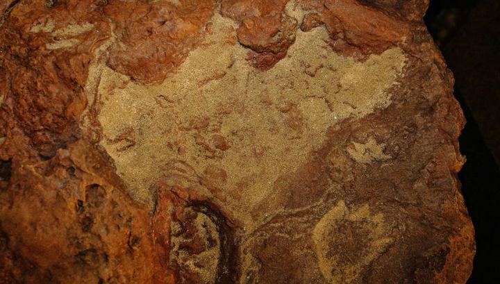 Учёные исследовали плиту с рекордным количеством следов динозавров и млекопитающих