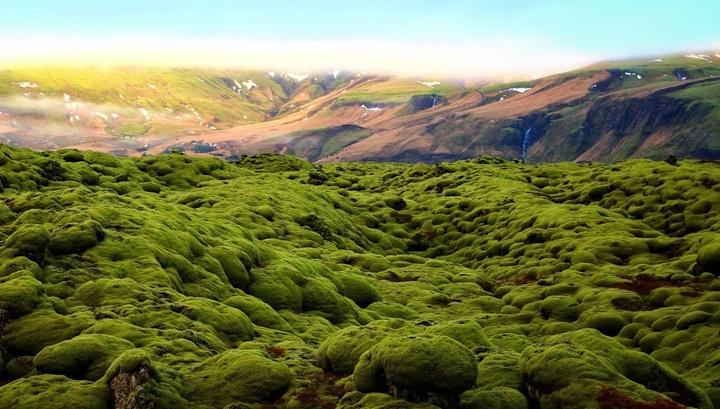 Растения на суше нашей планеты появились на 50-80 миллионов лет раньше, чем предполагалось.