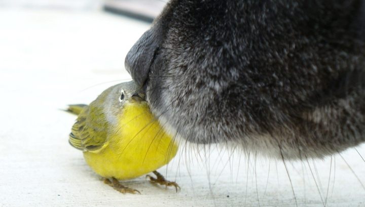"""У собак формируется """"ментальное представление"""" о цели поисков и ожидание того, к какому объекту должен привести запах."""