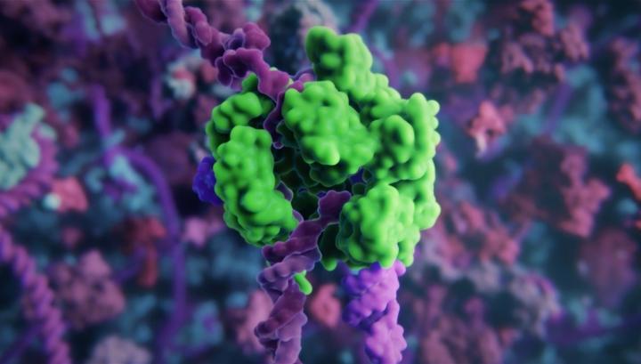 Генно-инженерный комплекс CRISPR-Cas9 в процессе прорезания ДНК-мишени.