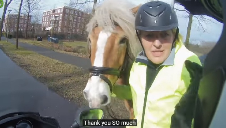 Нидерландский скутерист помог наезднице поймать убежавшего коня