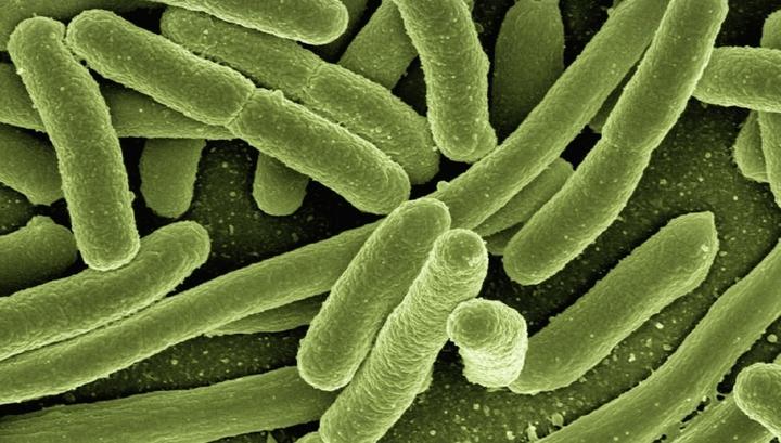 Воссоздавался последний универсальный общий предок на основе современного микроорганизма – кишечной палочки.