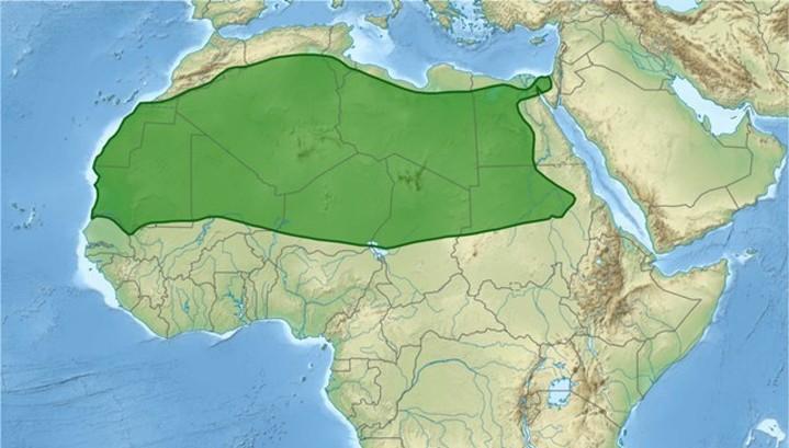 Ученые: площадь Сахары растет, озеро Чад мелеет