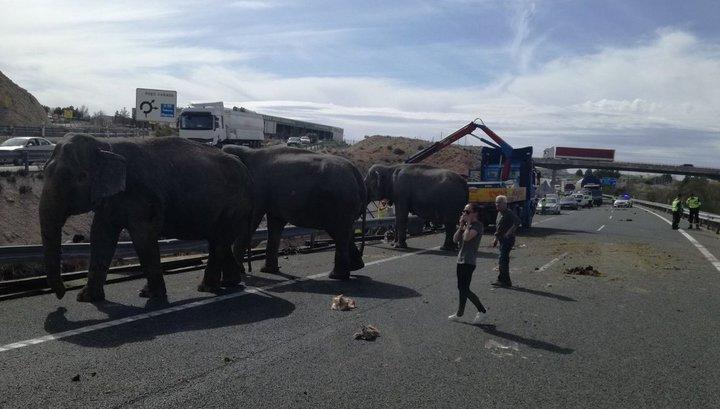 Грузовик со слонами попал в ДТП в Испании