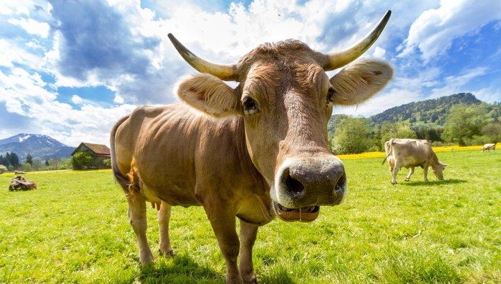 В Африке бизнесмен купил невесту за 500 коров и три машины