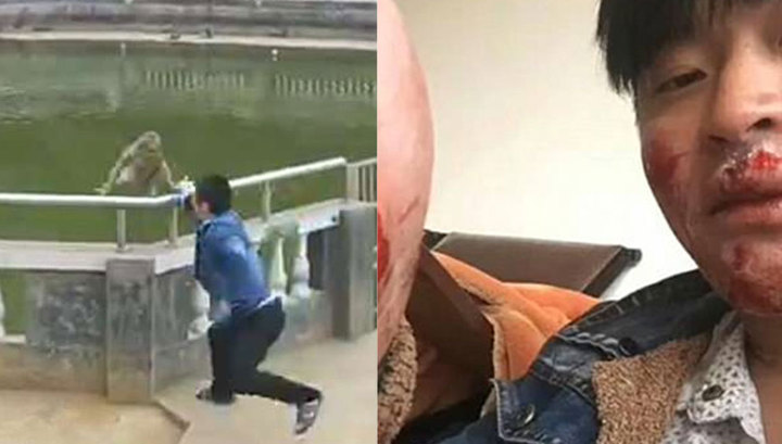 Макака отомстила туристу, скинувшему ее в пруд в китайском храме. Видео