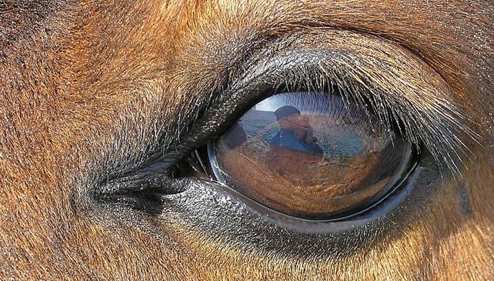 Будьте внимательны к тому, с каким настроением вы подходите к лошади, она непременно припомнит это при следующей встрече.