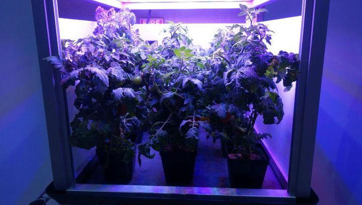 Благодаря многолетнему проекту NASA, на МКС уже в следующем году могут появиться помидоры.