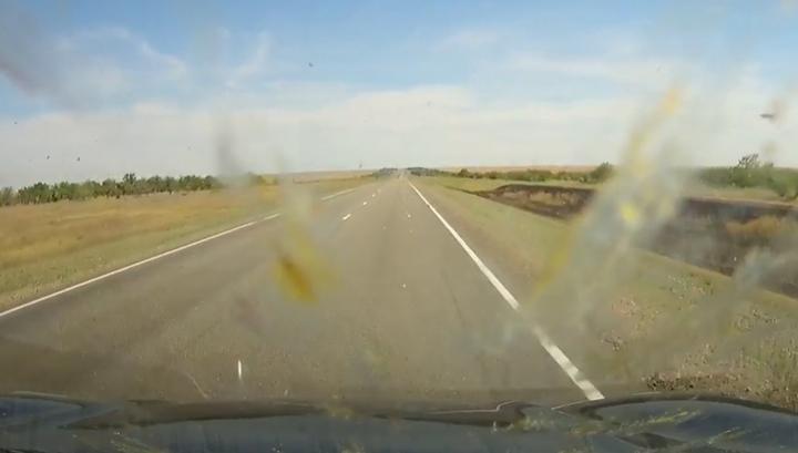 Водитель в Калмыкии проехал сквозь тучу саранчи и снял это на видео