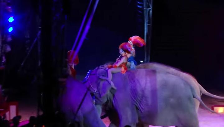 В германском цирке слониха свалилась в зрительские ряды