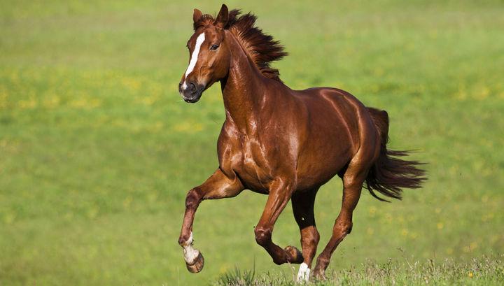 Лошадь фото (Equus)