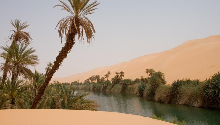 Растительность Сахары скудна: травы, кустарники и деревья можно встретить в оазисах, некоторых высотных районах или вдоль высохших русел рек.