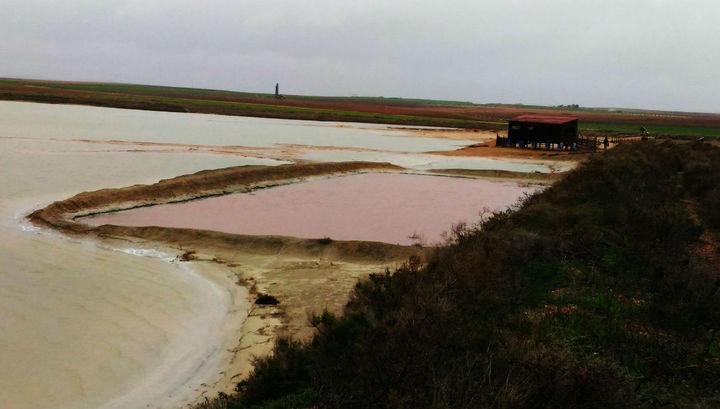 """""""Любительница соли"""" окрашивает воду в красный цвет."""