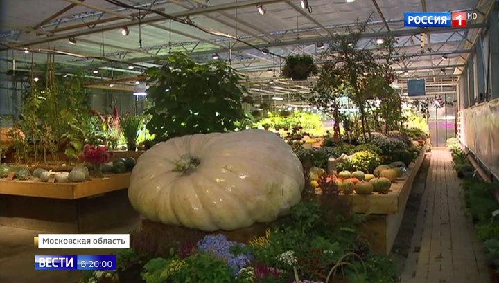 Сюрпризы бабьего лета: потоп в Приморье и картошка под снегом в Бурятии