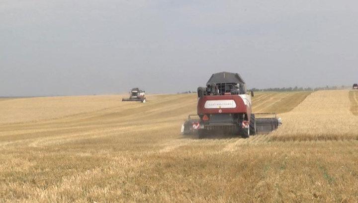Зерновая интервенция: фермеры США уступают российским на пшеничном поле