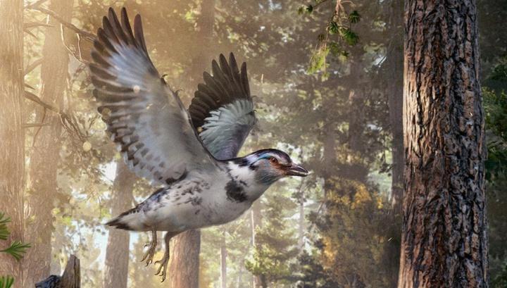 Jinguofortis perplexus в представлении художника. Необычное существо поможет учёным пролить свет на эволюцию полёта древних птиц.