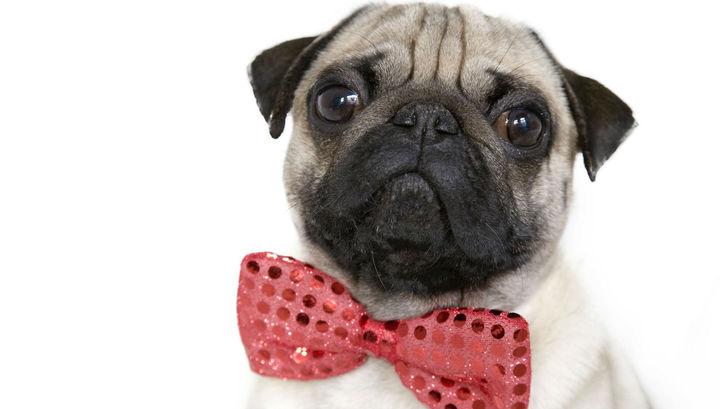 Собачий интеллект может быть впечатляющим, но их когнитивные способности не превосходят возможности других животных.
