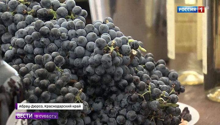 Площадь виноградников в России хотят увеличить втрое