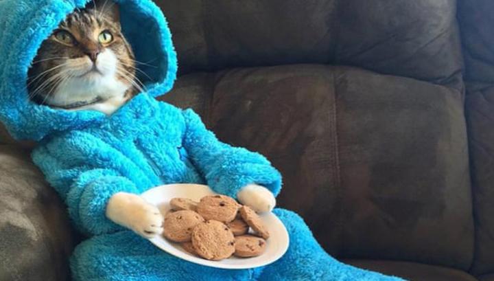 Посольство США в Австралии случайно разослало по имейлу приглашения с котом в пижаме
