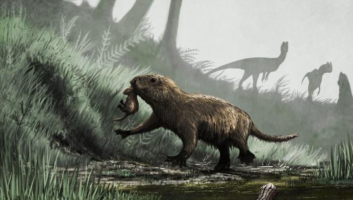 """В период господства динозавров """"дневные"""" млекопитающие непременно стали бы обедом для хищных видов."""