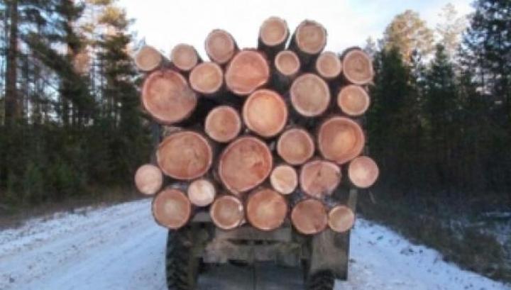 В республике проверяют все большегрузы с древесиной