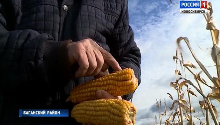 В Новосибирской области запускают новый аграрный проект