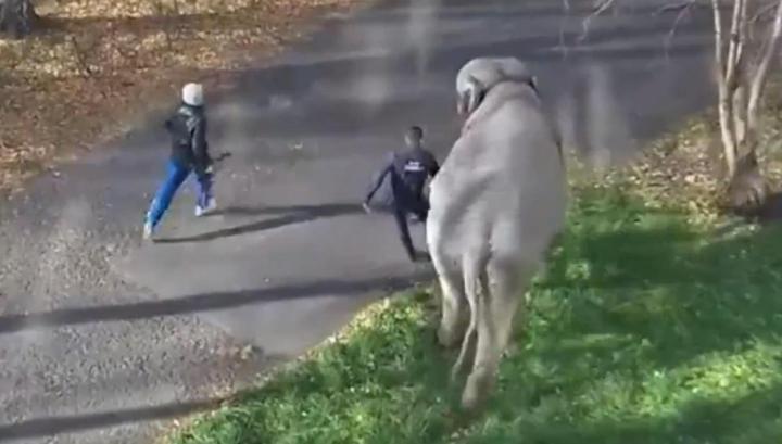 Два слона сбежали из гастролирующего цирка в Кемерове