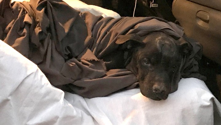 В США пес выжил, проведя два дня под завалами здания