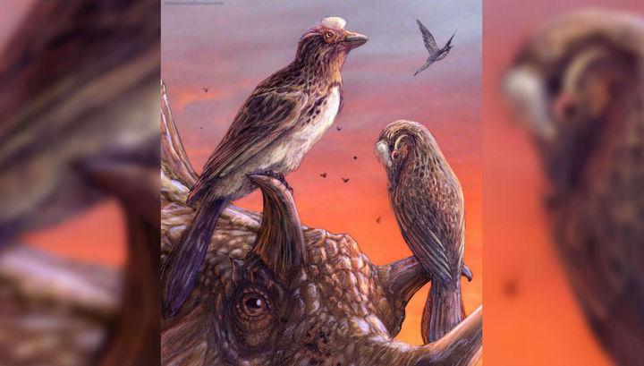 Древнее существо обитало на планете порядка 75 миллионов лет назад.