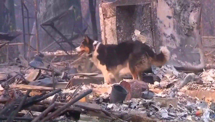 Число жертв пожара в Калифорнии выросло до 74