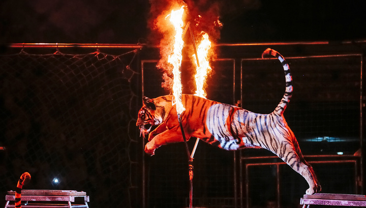 Генпрокуратура займется деятельностью зоопарков и цирков