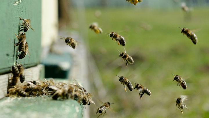 Секс на пчелой