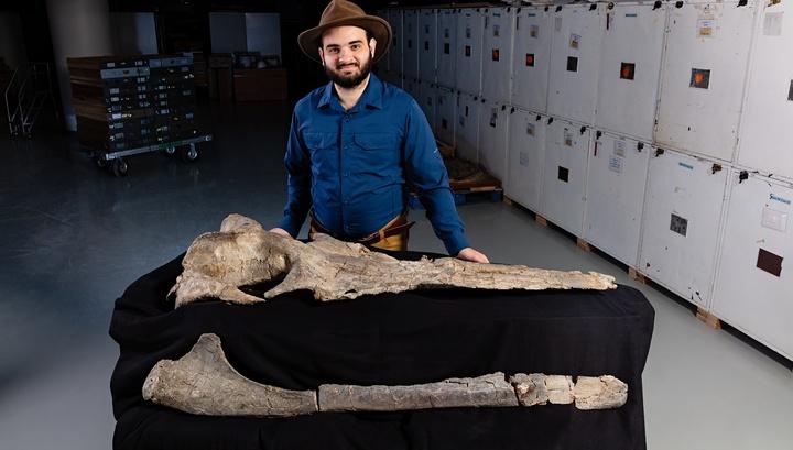 Палеобиолог Карлос Маурисио Передо демонстрирует останки древнего кита вида Maiabalaena nesbittae.