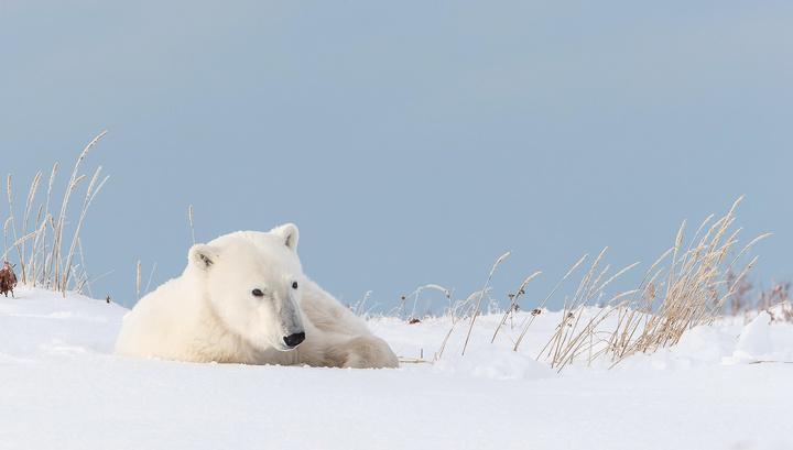 Мишек жалко: Путин назвал главную угрозу в Арктике