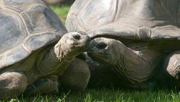 В Австрии 120-летние черепахи развелись после 115-летнего супружества