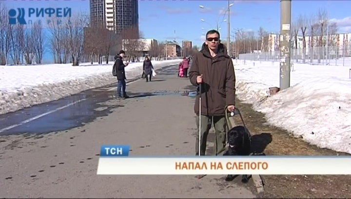 В Перми не стали задерживать хулигана, избившего инвалида и его собаку-поводыря