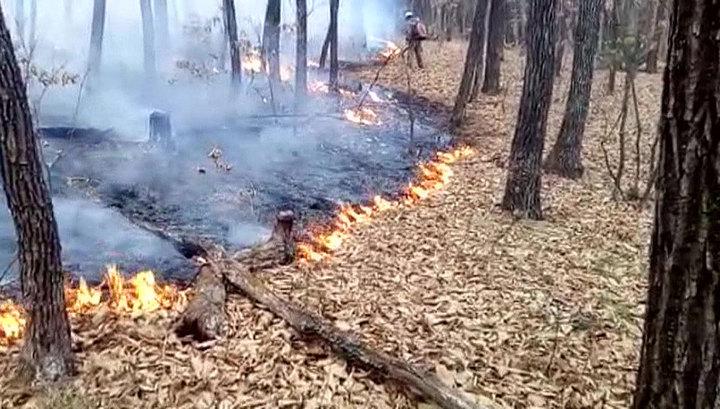 На Дальнем Востоке горят тысячи гектаров леса