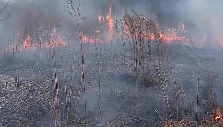 За сутки в России ликвидировано 250 лесных пожаров