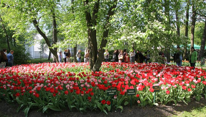 В Петербурге начинается фестиваль тюльпанов