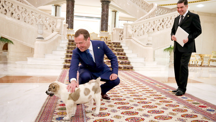 Медведеву подарили щенка алабая
