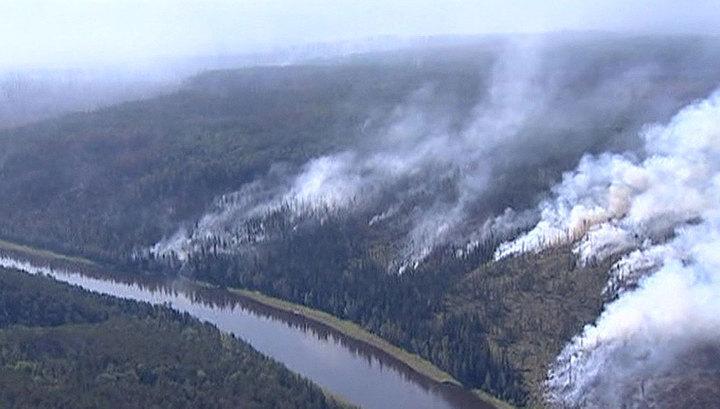 Площадь лесных пожаров в России увеличилась до 140 тысяч гектаров