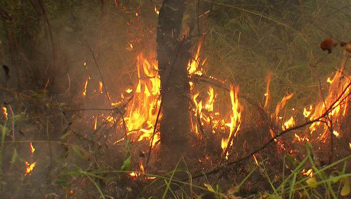 За сутки в России потушено 43 лесных пожара