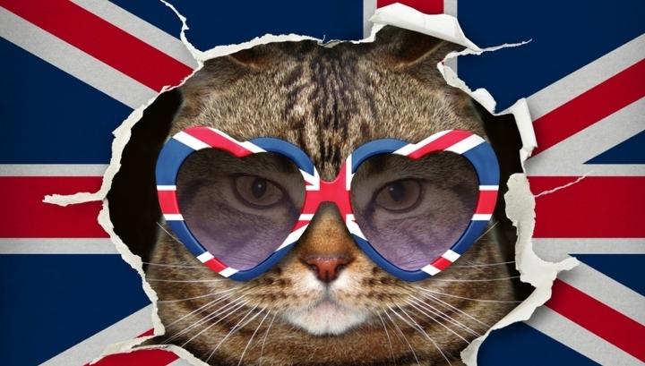 Британских арендаторов заставляют доплачивать за домашних животных
