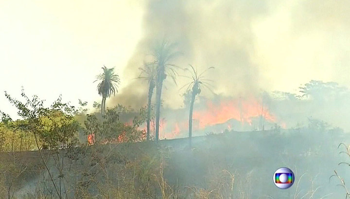 """Бразилия не может защитить леса Амазонии: """"зеленые легкие"""" планеты пожирает огонь"""