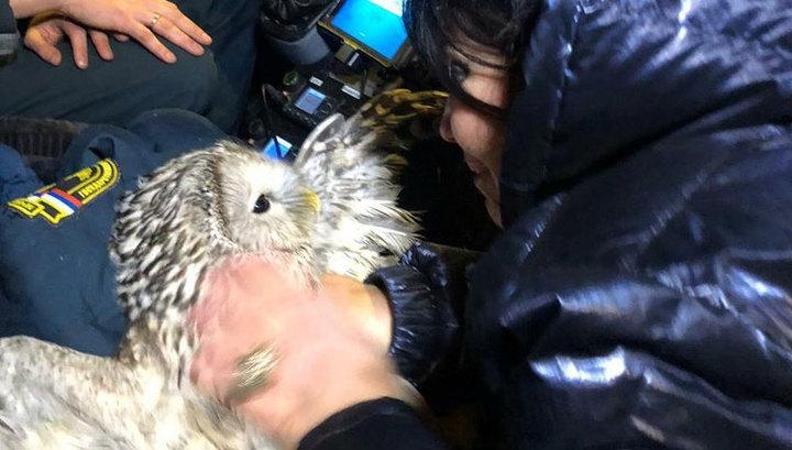 В числе спасенных из горящего дома в центре Москвы оказалась сова