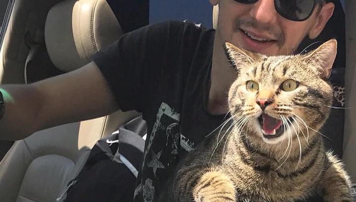 """У хозяина толстого кота нет претензий к """"Аэрофлоту"""""""