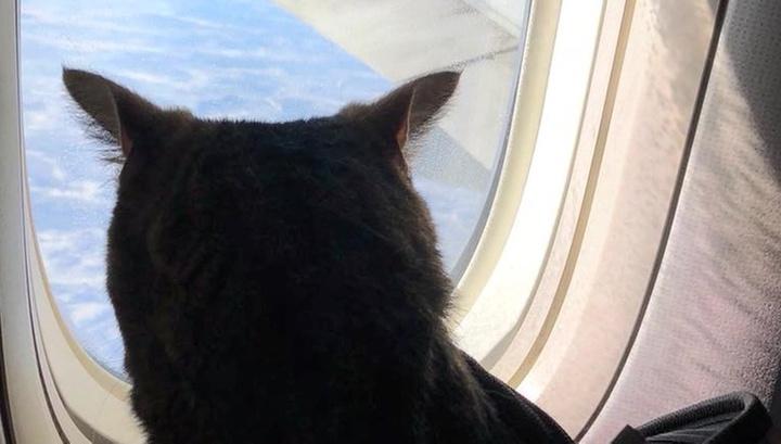 Внимание прессы зашкаливает: толстый кот Виктор стал настоящей звездой